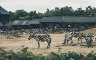 Aflivning af dyr i zoologiske haver